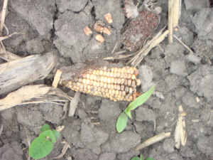 Decayed kernels don't germinate
